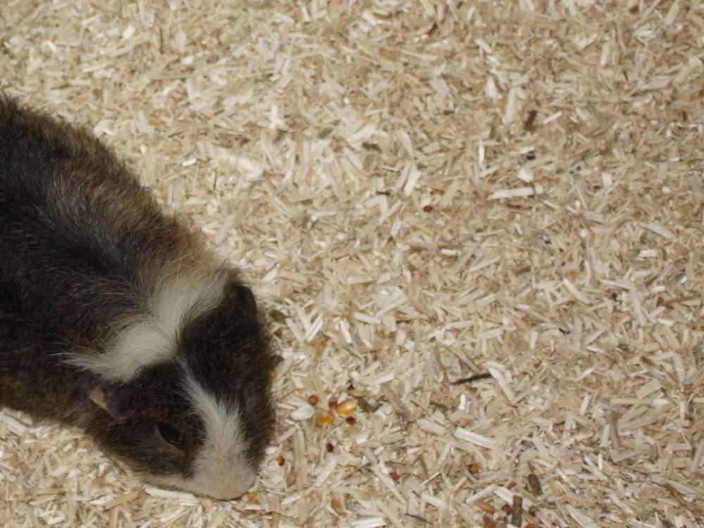 Hanfeinstreu für Nagetiere wie Hamster, Meerschweinchen, Kaninchen