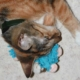 Katzenspielzeug mit Katzenminze - das lieben alle Katzen