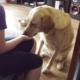 Was hilft gegen Übergewicht beim Hund