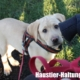 Labrador Welpe noch nicht stubenrein