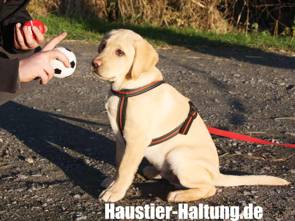 Die Welpenerziehung beim Ersthund funktioniert am besten in der Hundeschule