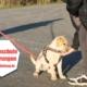 Hundeschule Erfahrungen positiv oder negativ?